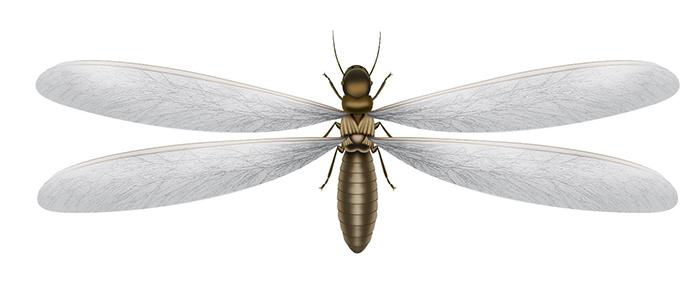 Flying Termites Treat Termites