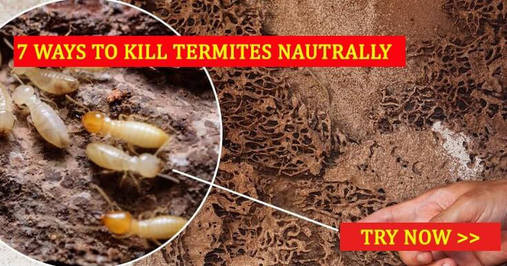 Top 7 Diy Methods To Kill Termites Naturally Treat Termites
